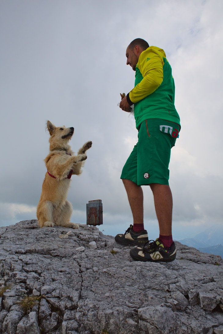 gipfelhund2